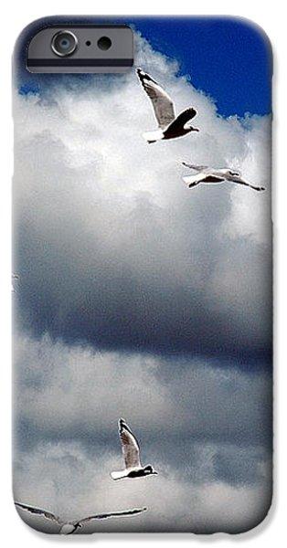 Wind Sailing Seagulls iPhone Case by Vicki Ferrari
