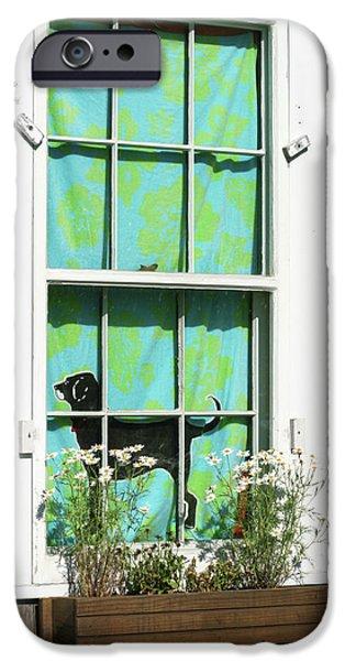 Black Dog iPhone Cases - Window on Marthas Vineyard Island Massachusetts iPhone Case by Michelle Wiarda