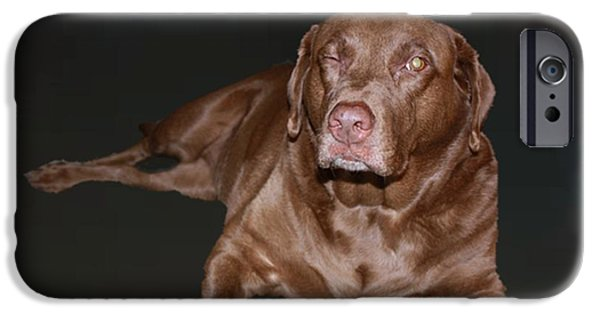 Chocolate Lab Digital Art iPhone Cases - Wink iPhone Case by ChelsyLotze International Studio
