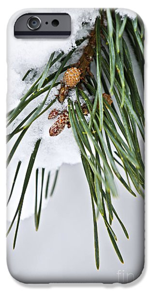Winter Trees Photographs iPhone Cases - Winter branches iPhone Case by Elena Elisseeva