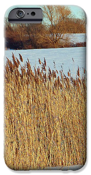 Winter Breeze iPhone Case by Aimee L Maher Photography and Art
