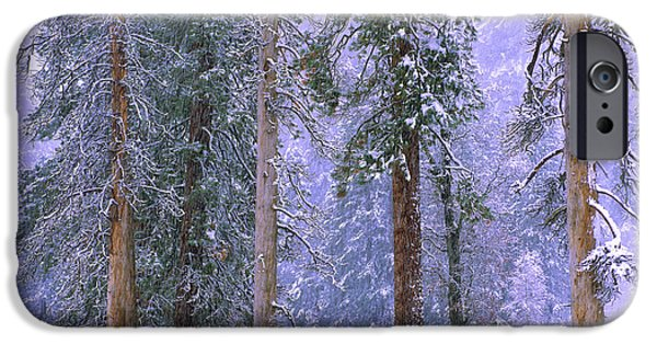 Winter Storm iPhone Cases - Winter In Yosemite National Park iPhone Case by Tim Fitzharris