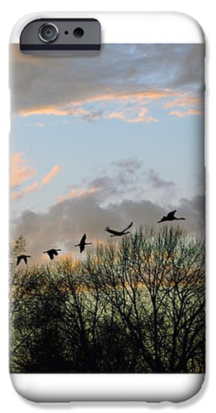 Winter Sunset  Silhouette iPhone Case by Brian Wallace