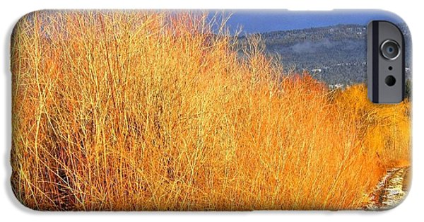 Willow Lake iPhone Cases - Winter Willows iPhone Case by Will Borden