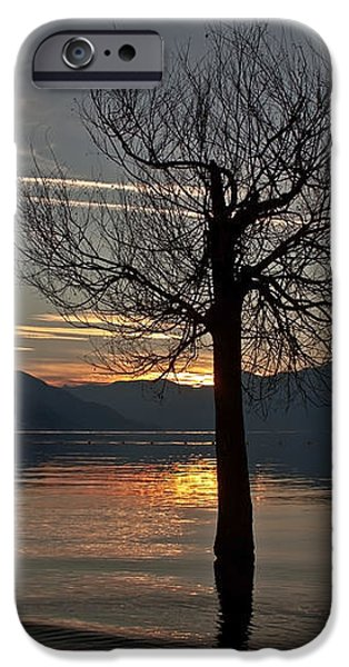 wintertree in the evening iPhone Case by Joana Kruse