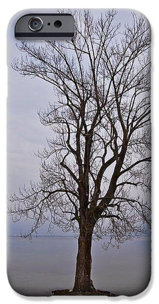 wintertree iPhone Case by Joana Kruse