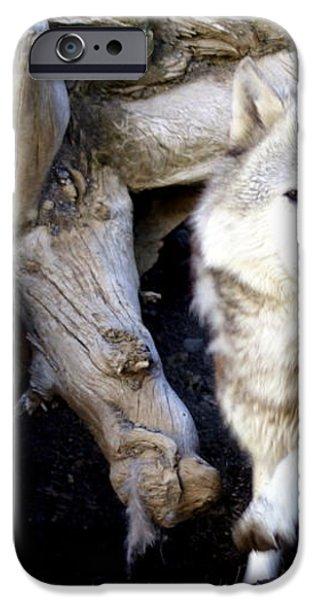 Wolf Den 1 iPhone Case by Marty Koch