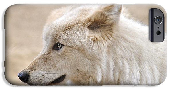 Small iPhone Cases - Wolf Eyes iPhone Case by Cindy Fullwiler