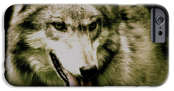 Animal Photograph Mixed Media iPhone Cases - Wolf Of The Night iPhone Case by Debra     Vatalaro