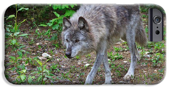 Wolf Photographs iPhone Cases - Wolf on the Prowl iPhone Case by Louise Heusinkveld