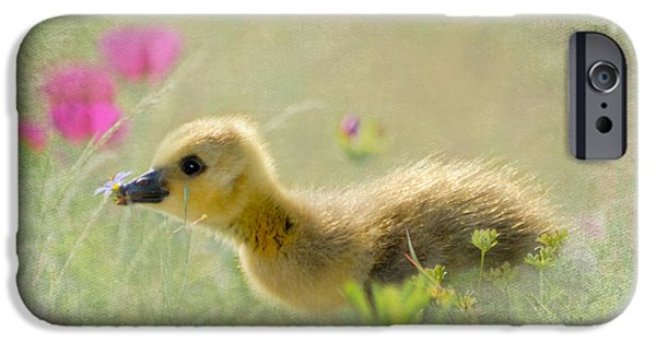 Baby Bird Digital iPhone Cases - Wonderful New World iPhone Case by Betty LaRue
