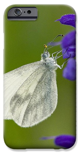 Wood White iPhone Case by Bob Gibbons