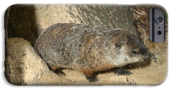 Groundhog iPhone Cases - Woodchuck iPhone Case by Ted Kinsman