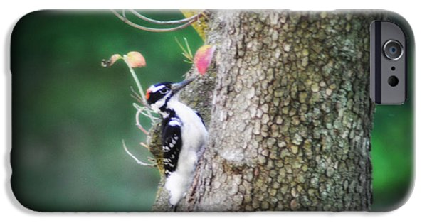 Hairy Woodpecker iPhone Cases - Woodpecker iPhone Case by Bill Cannon