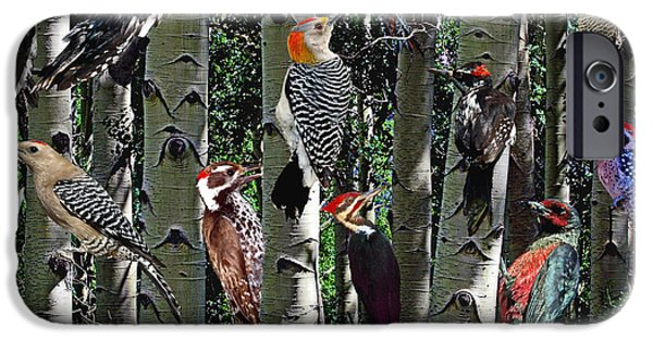 Hairy Woodpecker iPhone Cases - Woodpecker Collage iPhone Case by David Salter