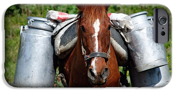 Horses iPhone Cases - Work horse at the Azores iPhone Case by Gaspar Avila