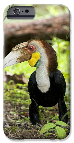 Hornbill iPhone Cases - Wreathed Hornbill iPhone Case by Tony Camacho