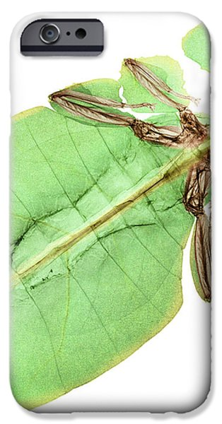 X-ray Of A Giant Leaf Insect iPhone Case by Ted Kinsman