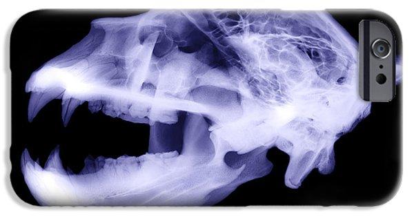 Kodiak iPhone Cases - X-ray Of Kodiak Bear Skull iPhone Case by Ted Kinsman