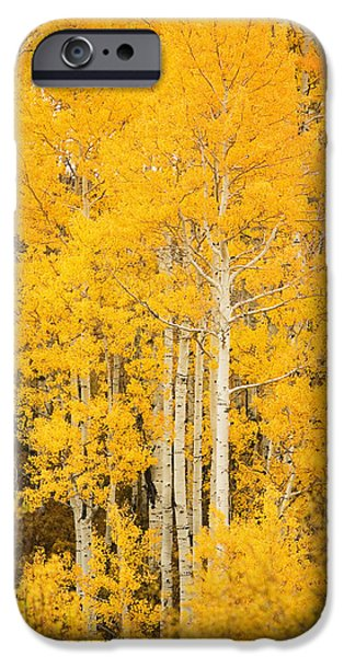 Northern Colorado iPhone Cases - Yellow Aspens iPhone Case by Ron Dahlquist - Printscapes