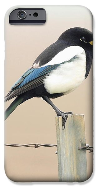 Yellow-billed Magpie iPhone Case by Wingsdomain Art and Photography