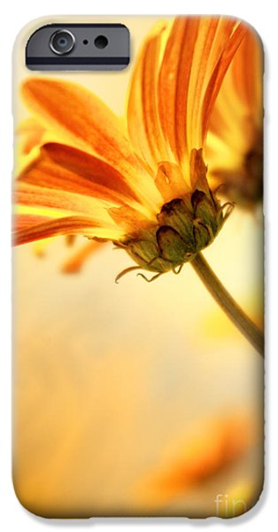 Agriculture iPhone Cases - Yellow Daisies iPhone Case by Carlos Caetano