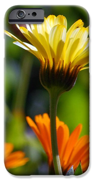 Florals Photographs iPhone Cases - Yellow Daisy iPhone Case by Amy Fose