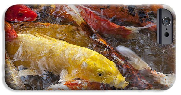 Japanese School iPhone Cases - Yellow Koi iPhone Case by Darcy Michaelchuk