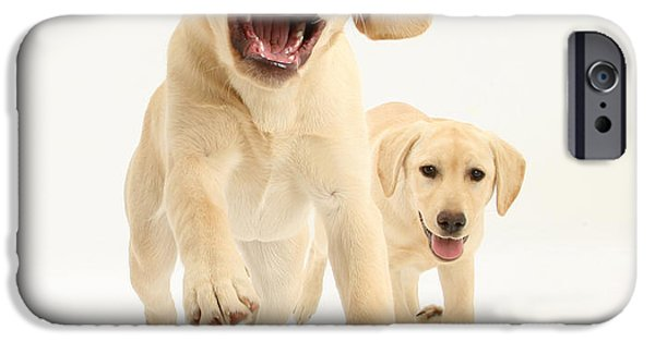 Puppies iPhone Cases - Yellow Labrador Pups Leaping And Running iPhone Case by Mark Taylor