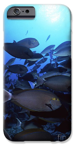 Yellow Mask Surgeonfish, Indonesia iPhone Case by Beverly Factor