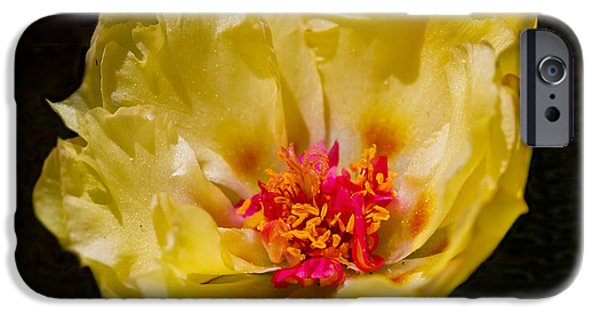 Close Glass iPhone Cases - Yellow Portulaca iPhone Case by Mitch Shindelbower