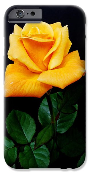 Rosaceae iPhone Cases - Yellow Rose iPhone Case by Michael Peychich