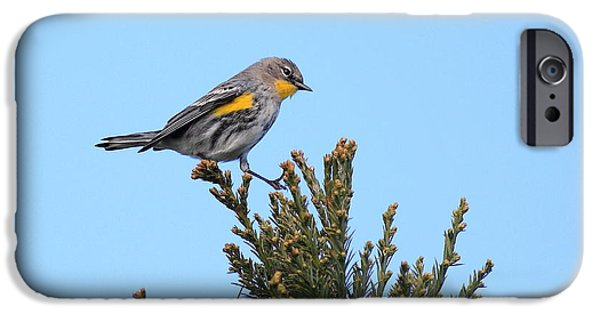 Warbler iPhone Cases - Yellow-Rumped Warbler Bird Perched . 40D12021 iPhone Case by Wingsdomain Art and Photography
