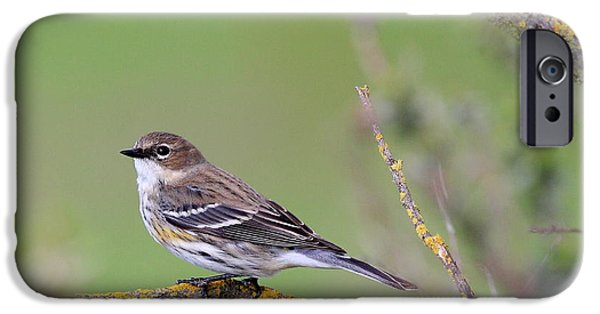 Warbler iPhone Cases - Yellow-Rumped Warbler Bird Perched . 40D12105 iPhone Case by Wingsdomain Art and Photography