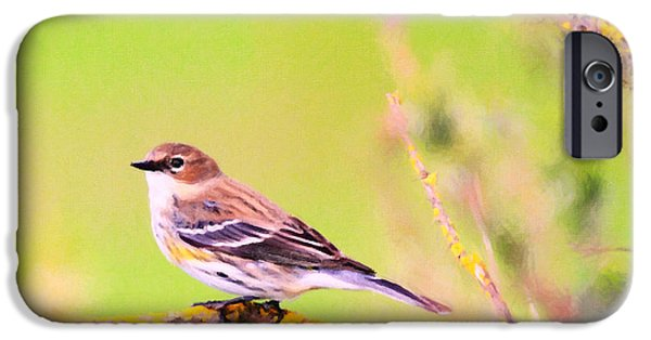 Warbler iPhone Cases - Yellow-Rumped Warbler . Painterly iPhone Case by Wingsdomain Art and Photography