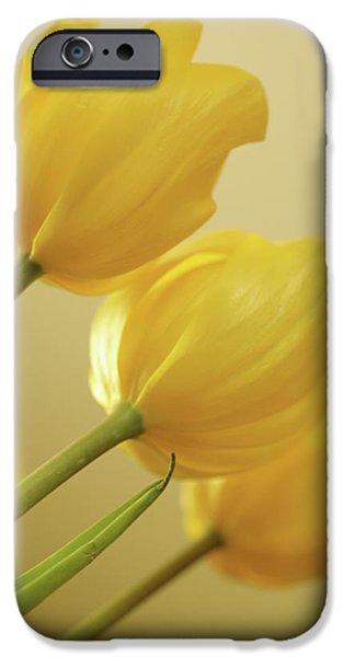 Yellow Tulip Trio iPhone Case by Bonnie Bruno