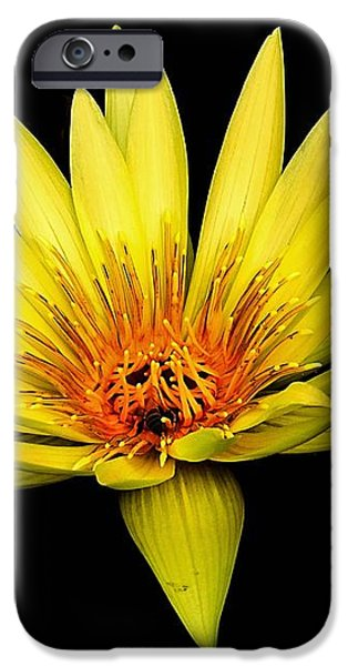 Yellow Water Lily iPhone Case by Nick Zelinsky