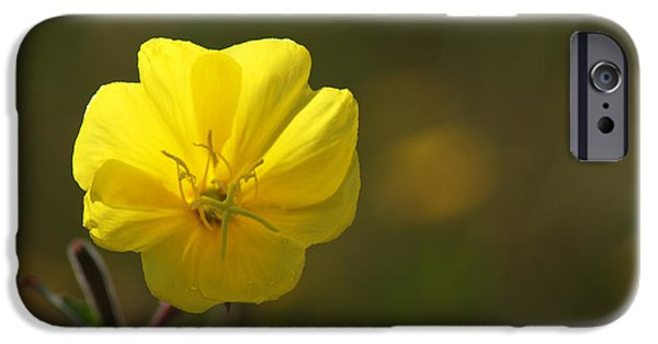 Christmas Greeting iPhone Cases - Yellow wild flower iPhone Case by Chris Day