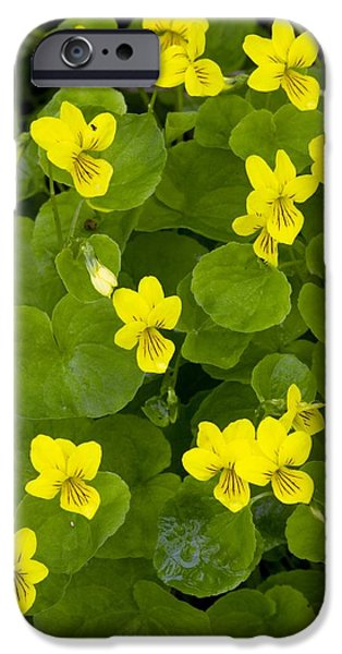 Norway iPhone Cases - Yellow Wood Violet (viola Biflora) iPhone Case by Bob Gibbons