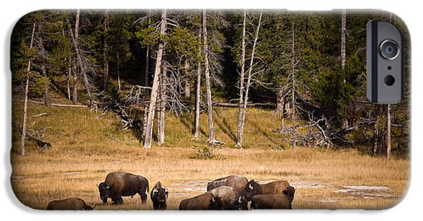 Meadow iPhone Cases - Yellowstone Bison iPhone Case by Steve Gadomski
