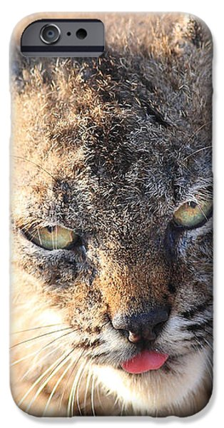 Young Bobcat 04 iPhone Case by Wingsdomain Art and Photography
