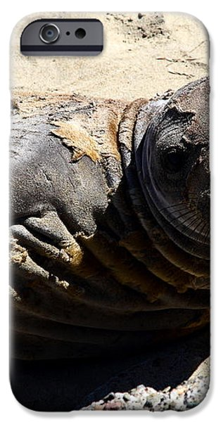 Young Elephant Seal Molting . 7D16091 iPhone Case by Wingsdomain Art and Photography