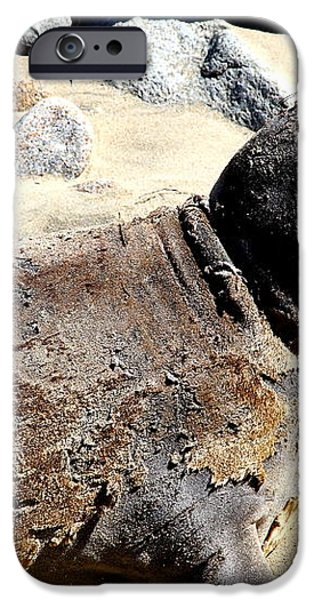 Young Elephant Seal Molting . 7D16118 iPhone Case by Wingsdomain Art and Photography
