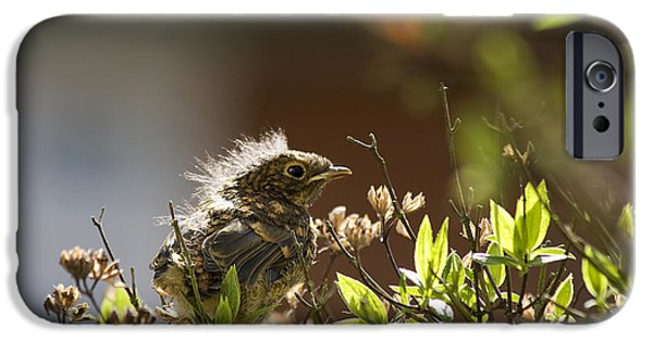 Nature Scene Photographs iPhone Cases - Young robin iPhone Case by Jane Rix