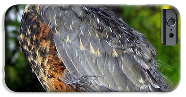 Baby Bird iPhone Cases - Young Robin iPhone Case by Will Borden