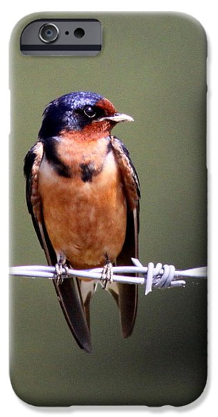 Barn Swallow iPhone Cases - Young Swallow iPhone Case by Travis Truelove