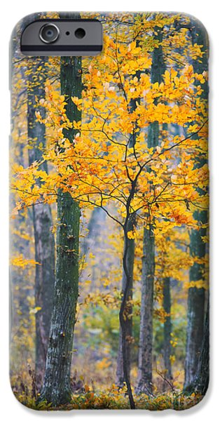 Beautiful Autumn Day iPhone Cases - Young tree foliage iPhone Case by Gabriela Insuratelu