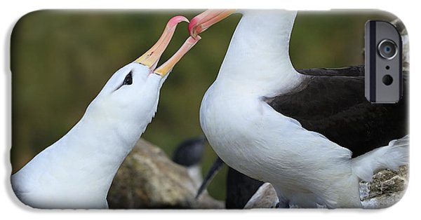 Albatross iPhone Cases - Youre The One iPhone Case by Tony Beck