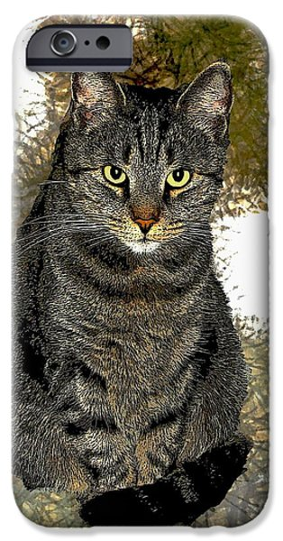 Photos Of Cats iPhone Cases - Zachary iPhone Case by Dale   Ford