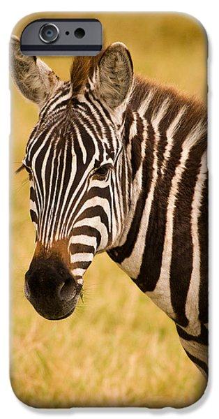 Kenya Photographs iPhone Cases - Zebra iPhone Case by Adam Romanowicz